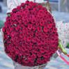 Букет 151 высокая красная роза высотой 70 см на заказ