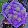 Сезонный букет 25 астр на заказ в интернет-магазине цветов