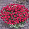 101 алая роза в корзине купить с доставкой