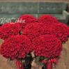 1001 алая метровая роза купить с доставкой