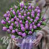 75 фиолетовых пионовидных тюльпанов в шляпной коробке