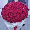 "101 velvet rose varieties ""Grand Prix"", height 70 cm"