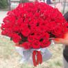 75 алых роз высота 60 см