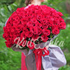 65 red roses varieties from Ecuador Freedom