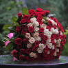 101 rose red and cream color with a height of 50 cm