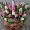 25 тюльпанов разного цвета в корзине