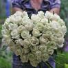 Букет 51 белая высокая роза в форме сердца
