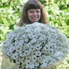Bouquet of daisies 'Glade number 2' with delivery in Kiev