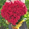 """Букет 51 красная метровая роза в виде сердца (Эквадор, """"Фридом"""")"""