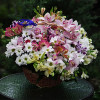 A large basket of flowers 'Dressy'