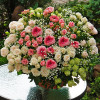 Large basket with roses 'Anniversary'