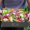 """Коробка с орхидеями и конфетами """"Соломие"""""""