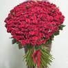 Огромный букет из 151 красной метровой розы
