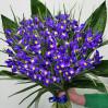 Букет 51 ярко-синий ирис купить в Киеве с доставкой