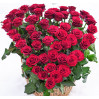 51 roses in the shape of a heart in a basket