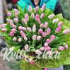 51 тюльпан нежно-розовый купить с доставкой в Киеве