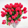 Букет лиловых тюльпанов купить в Киеве с доставкой