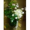 Заказ цветов в Киеве, доставка букетов, бутоньерка жениху №12