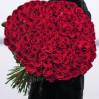 151 красная метровая голландская роза сорта Freedom на заказ