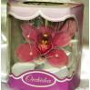 Орхидея в коробочке: цветы с доставкой к 8 марта в Киеве