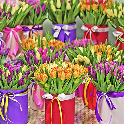 Delivery tulips
